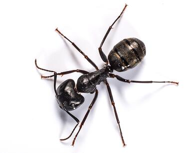 carpenter ant removal near me