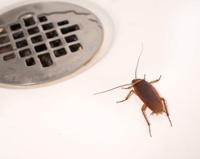 Cockroach In Bathroom