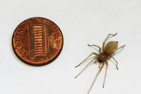 35_Cellar Spider and Coin