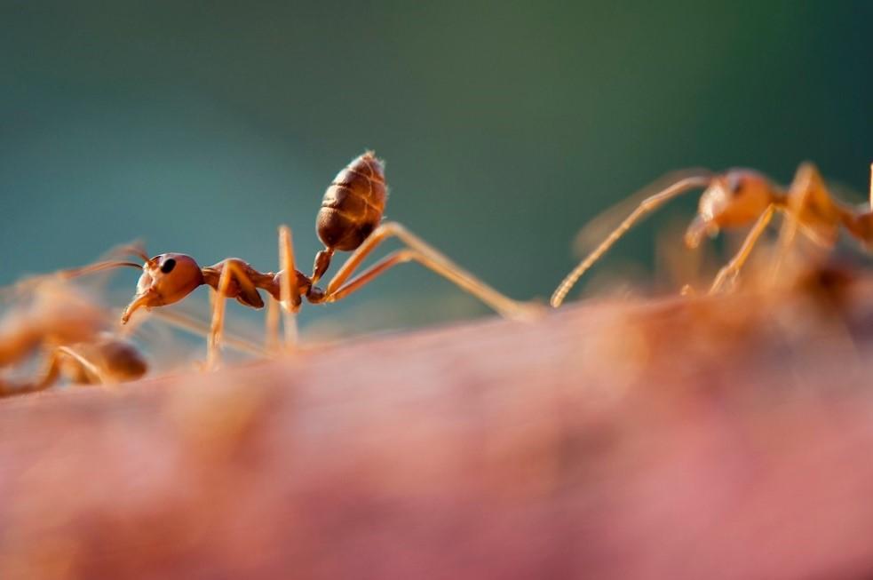 Ant Removal Spotswood, NJ.jpg