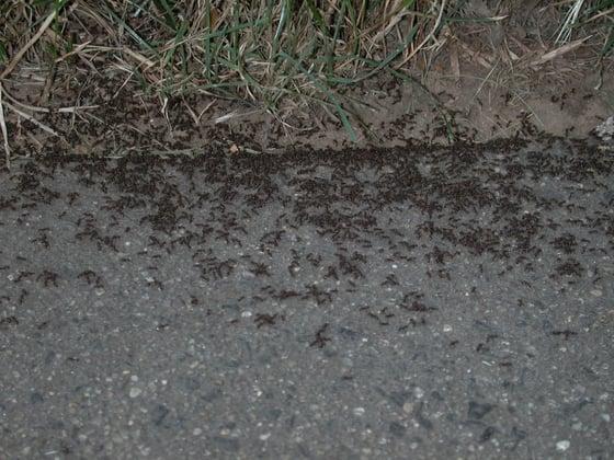 Ant Service NJ.jpg