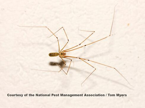 Brown Spider NJ.jpg