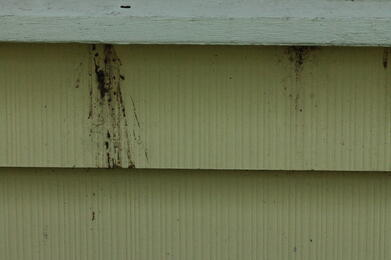 evidence of carpenter bees