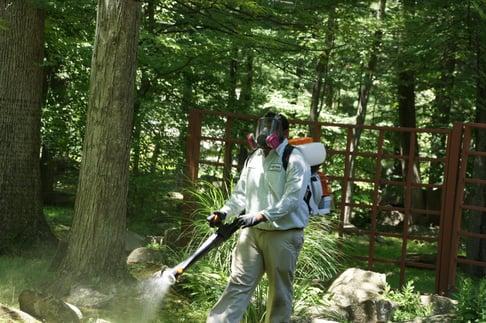 Best Mosquito Service Robbinsville NJ