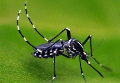 Mosquito Spotswood, NJ.jpg