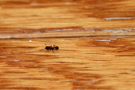 ant removal near me