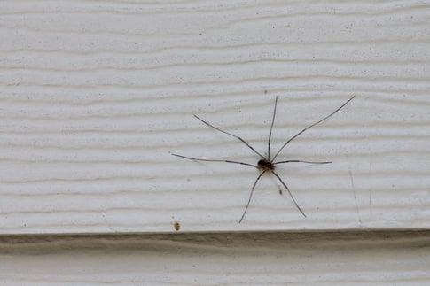 Spider In NJ.jpg