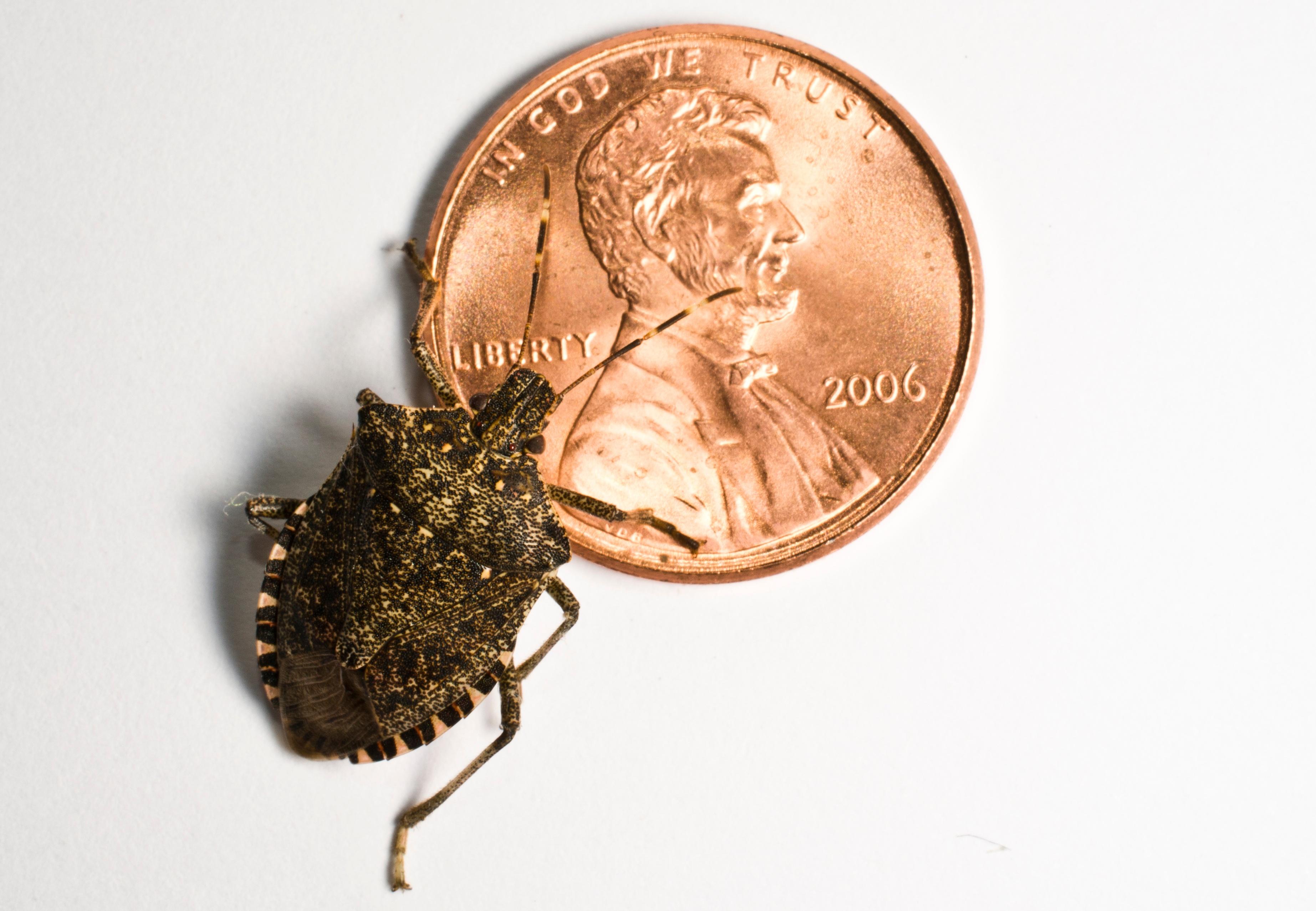 Stink Bugs In My Bathroom