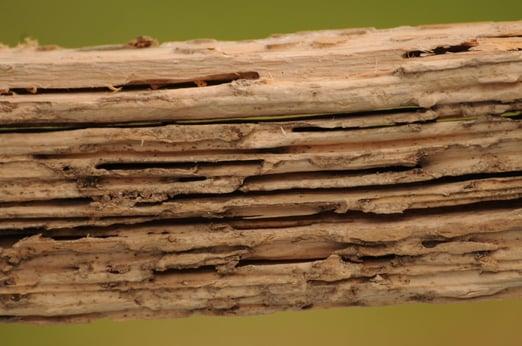 Termite Wood Damage NJ.jpg