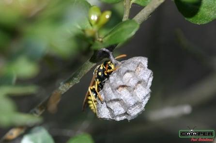 Wasp Prevention NJ.jpg