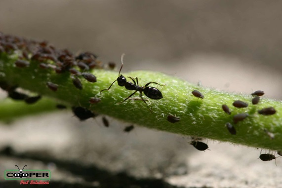 Carpenter Ant Removal New Jersey