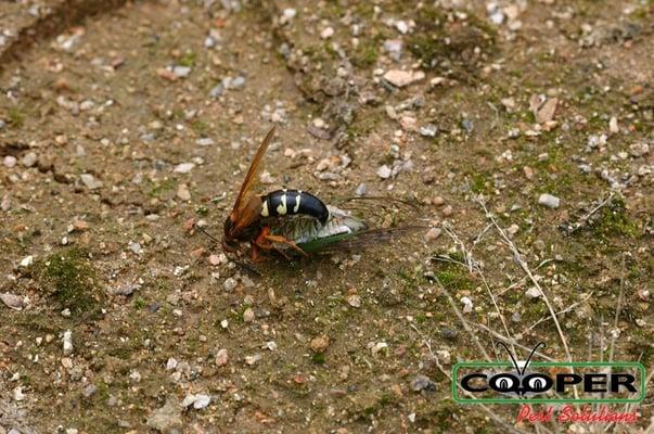 best cicada killer service