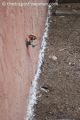 diatomaceous earth ant removal.jpg