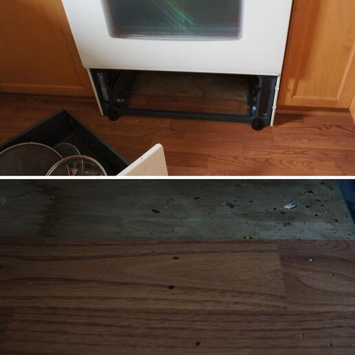 Mouse Droppings Under Stove
