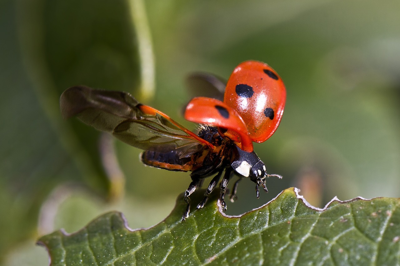 Ladybug Prevention NJ