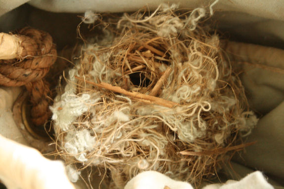 Mouse Nest In House