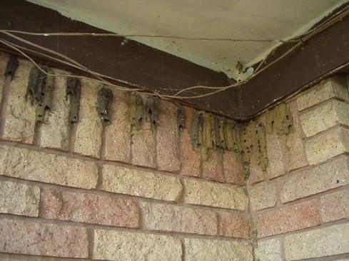 Mud Wasp Service Online