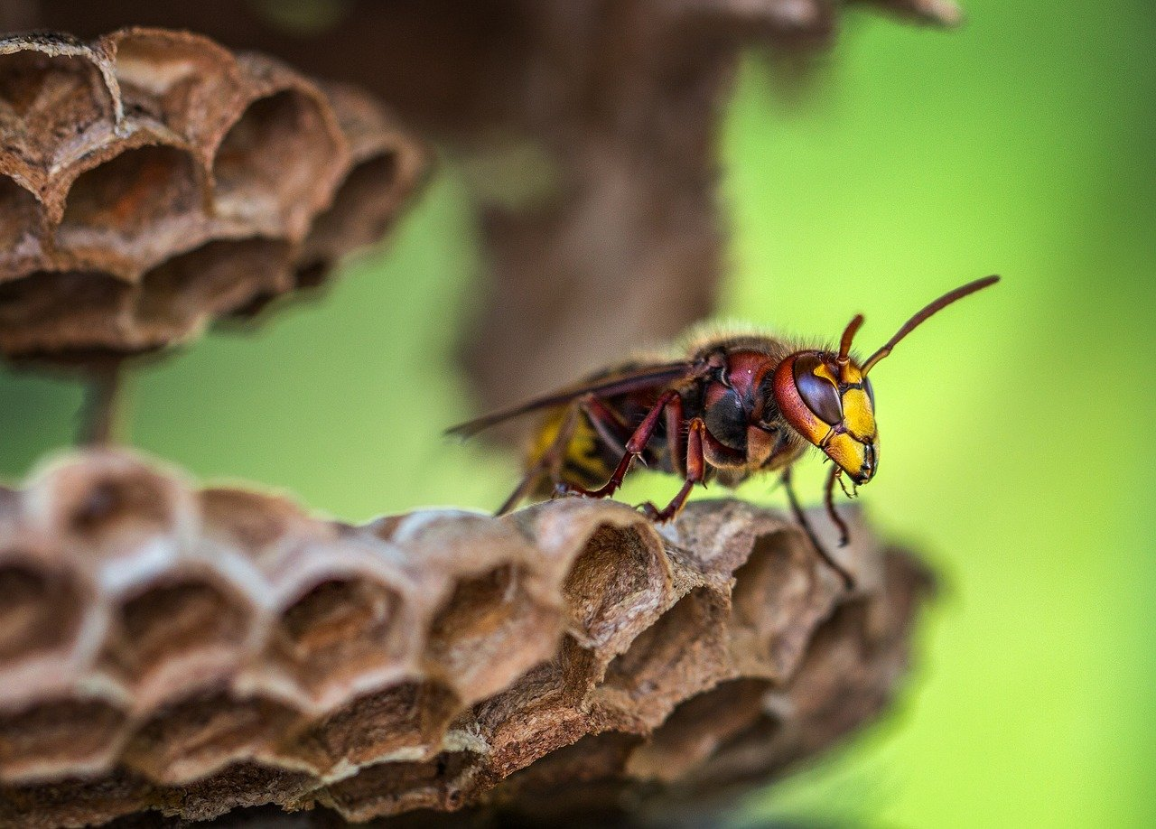 What Does Paper Wasp Look Like