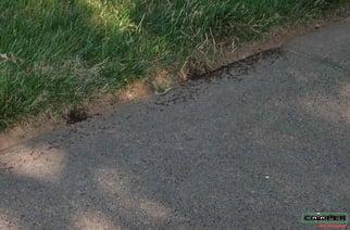 Pavement Ants Monroe NJ