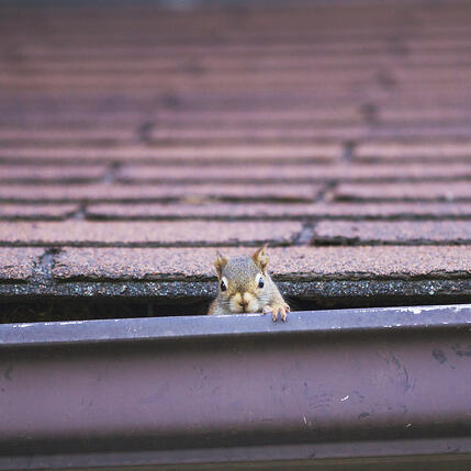 Squirrels On My Roof