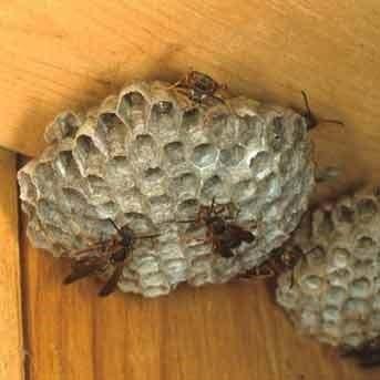 Paper Wasp Service Online