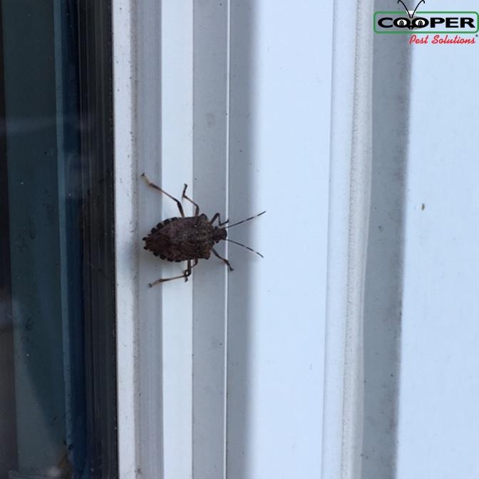 Stink Bug Service NJ