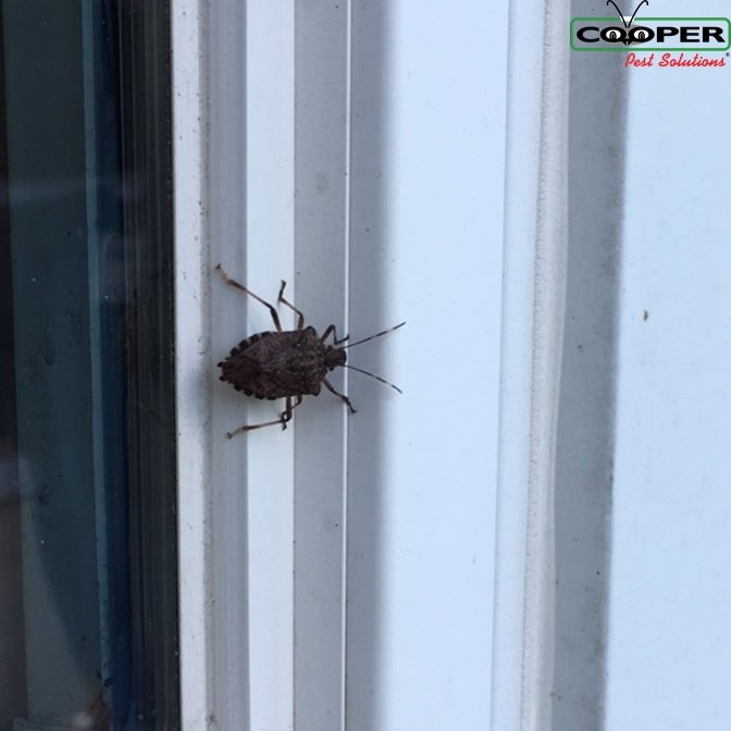 Stink Bug Service NJ