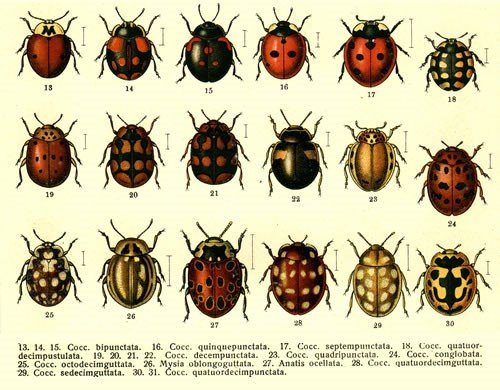 Ladybug Service PA