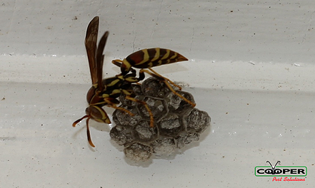 Yellow Jacket Removal NJ