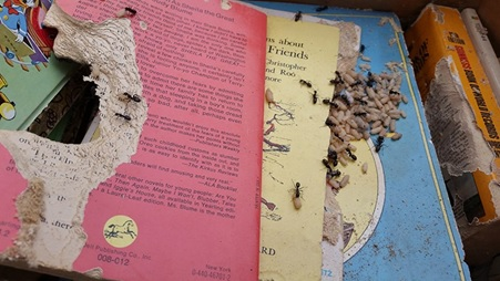 Carpenter Ants NJ