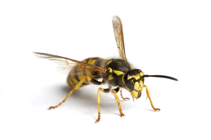 Buy Online - Stinging Insects Removal photo