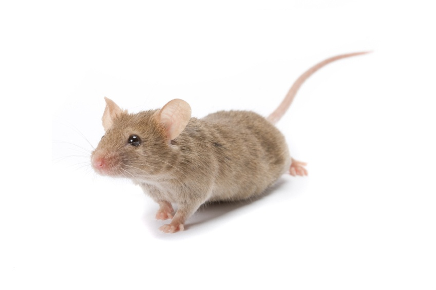 Buy Online - Mouse Removal photo