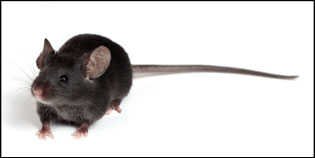 Best rodent exterminator in NJ and PA