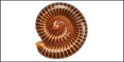 millipedes.jpg