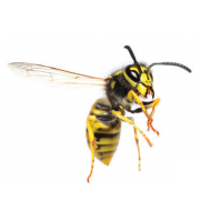 bee_image.png