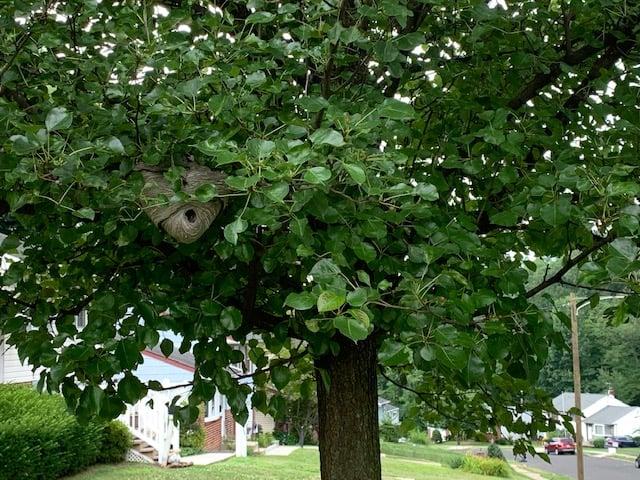 Get Rid of a Hornet Nest