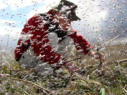 midge swarm university of wisconson-madison