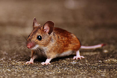 Rodent Proof Your Home