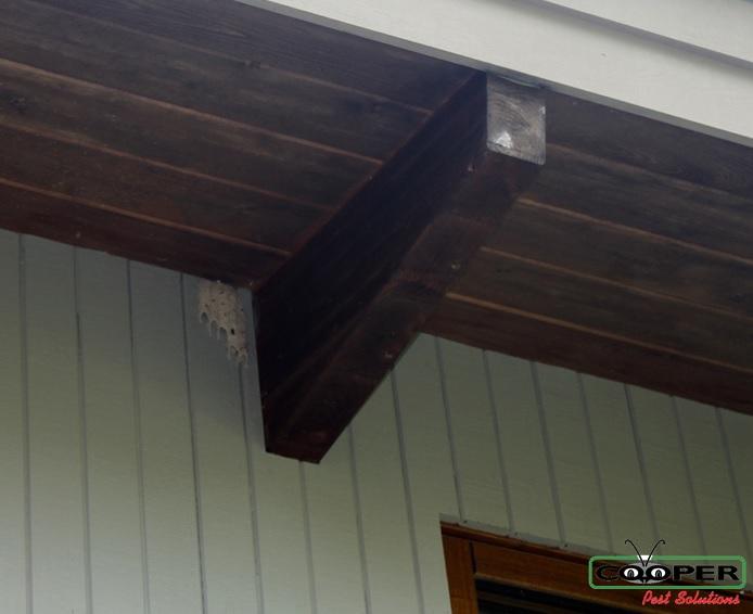 mud wasp nest.jpg