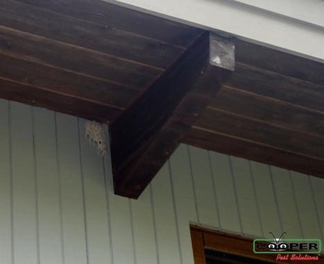 Mud Wasp Nest Information