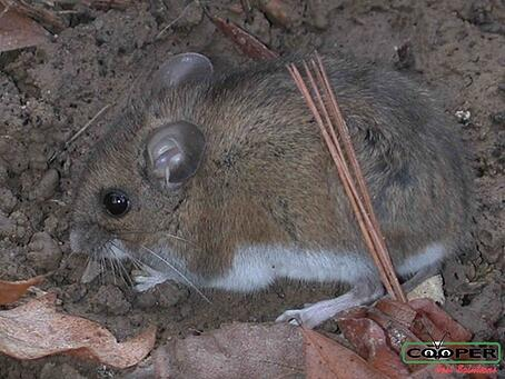 Mouse Removal NJ