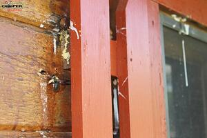Carpenter Bee Hole In Wood