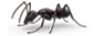 Protect your home with Cooper's Carpenter Ant Service