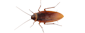 Exterminate roaches in your NJ or PA home.