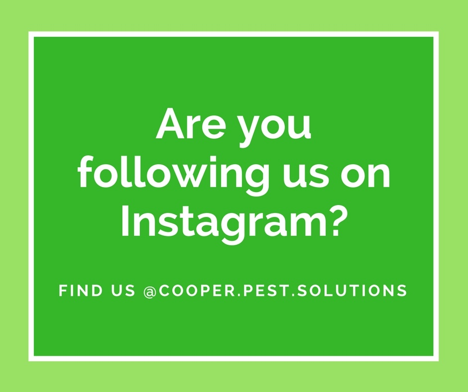 Follow Cooper Pest Solutions on Instagram