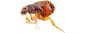 Flea Removal in NJ and  PA | Cooper Pest Control