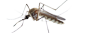 Mosquito Control in NJ and PA