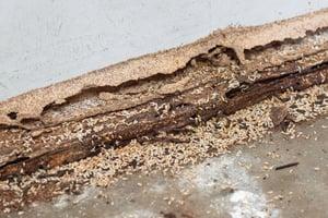 termite monitoring