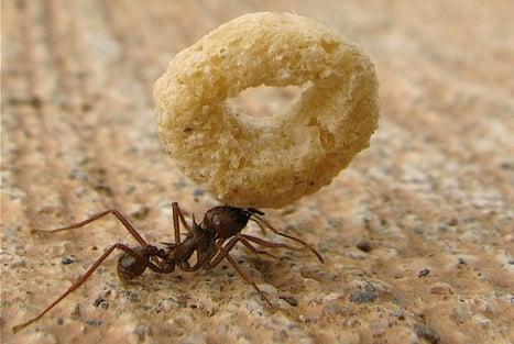 Ant Removal NJ