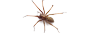 Spider removlal in NJ and PA | Cooper Pest Control
